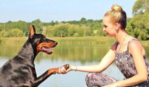3 razlogi zakaj izbrati e-ovratnico za treniranje vašega psa