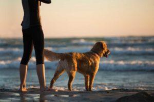 3 načini, kako že ta trenutek izboljšati vedenje vašega psa
