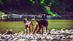 Ali so elektronske pasje ovratnice varne?